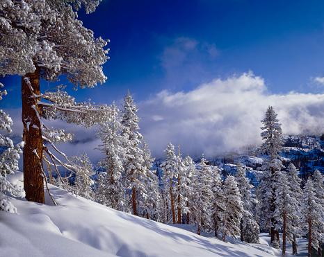 Snowdrift「Winter in the High Sierra Mountains」:スマホ壁紙(18)
