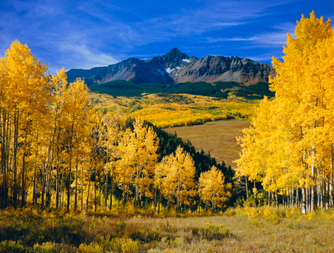 Aspen Tree「Mount Wilson With Autumn Aspen Trees」:スマホ壁紙(12)