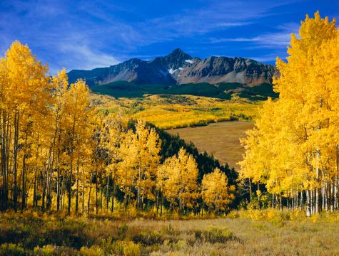 Aspen - Colorado「Mount Wilson With Autumn Aspen Trees」:スマホ壁紙(18)