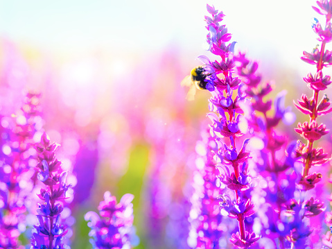 Lavender Color「Pollination: Nature's miracle process」:スマホ壁紙(16)
