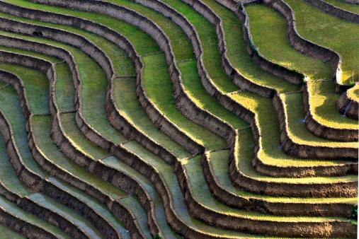 Vietnam「Rice paddies at Sapa Valley, Northern Vietnam」:スマホ壁紙(14)