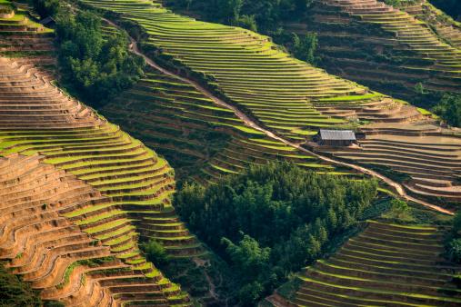Vietnam「Rice paddies at Sapa Valley, Northern Vietnam」:スマホ壁紙(5)