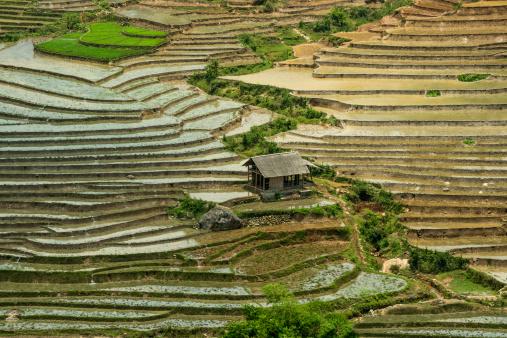 Vietnam「Rice paddies at Sapa Valley, Northern Vietnam」:スマホ壁紙(7)