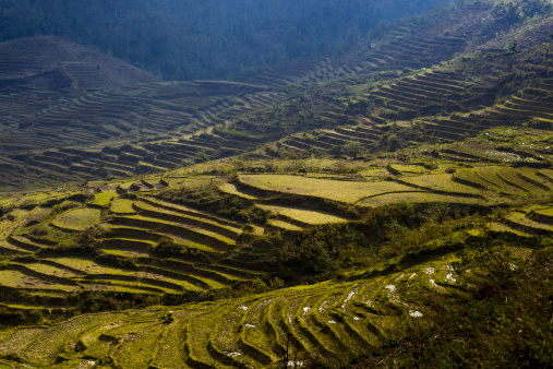 Vietnam「Rice paddies in preparation for summer」:スマホ壁紙(6)