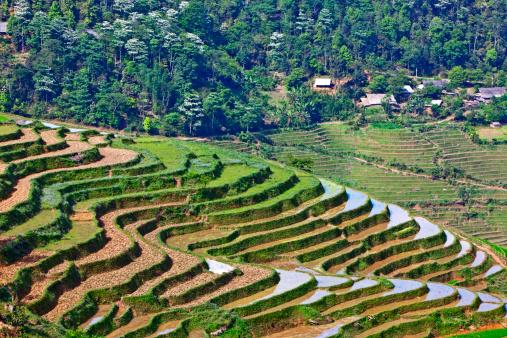 Vietnam「Rice paddies」:スマホ壁紙(12)