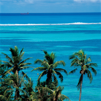 Saipan「scenic of Saipan,palm tree and sea,U.S.A.」:スマホ壁紙(17)
