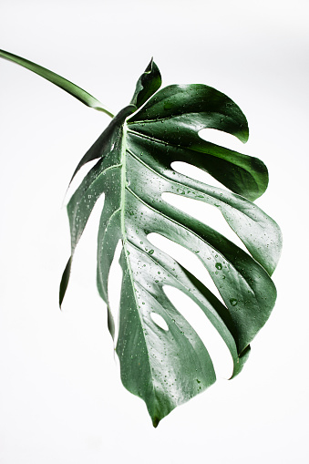 Wet「Water droplets on wet leaf」:スマホ壁紙(0)