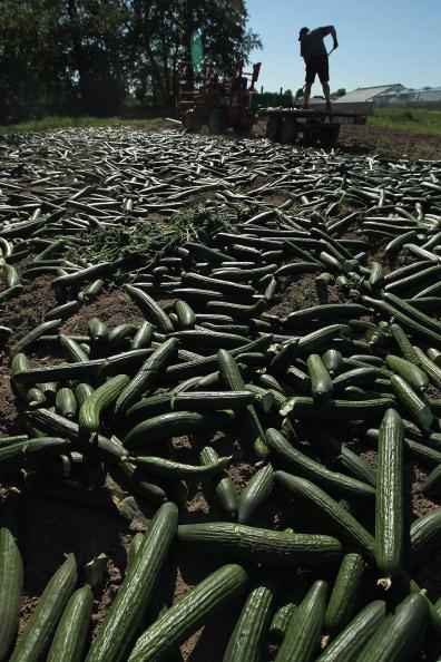 Salad「Farmers Fear Ruin Following EHEC Outbreak」:写真・画像(0)[壁紙.com]
