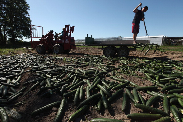 Farm「Farmers Fear Ruin Following EHEC Outbreak」:写真・画像(18)[壁紙.com]