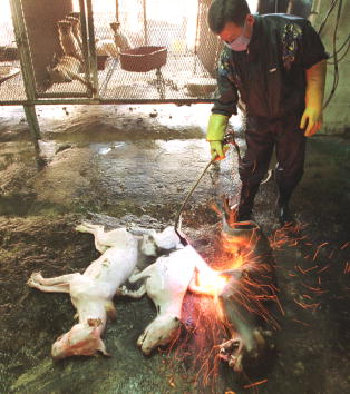 Blow Torch「Koreans Dogmeat-Eating Tradition Under Fire」:写真・画像(11)[壁紙.com]