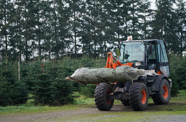 Infectious Disease「Christmas Tree Sales Begin In Germany During The Pandemic Second Wave」:写真・画像(13)[壁紙.com]