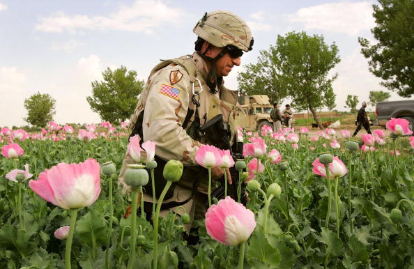 Oriental Poppy「Foreign Troops Targeted In Afghan Suicide Attack」:写真・画像(2)[壁紙.com]