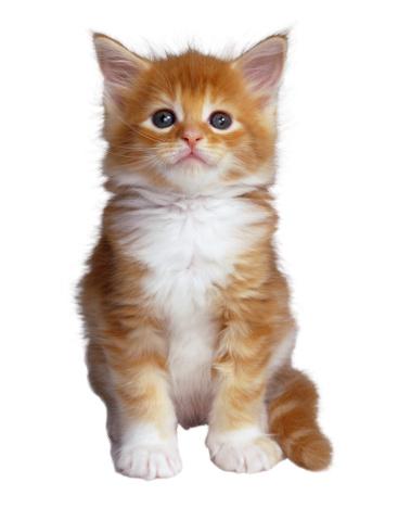 Kitten「Orange Kitten」:スマホ壁紙(17)
