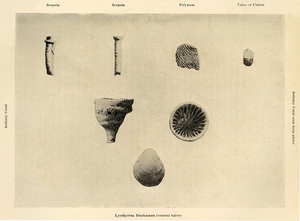 Specimen Holder「Marine Organisms」:写真・画像(1)[壁紙.com]