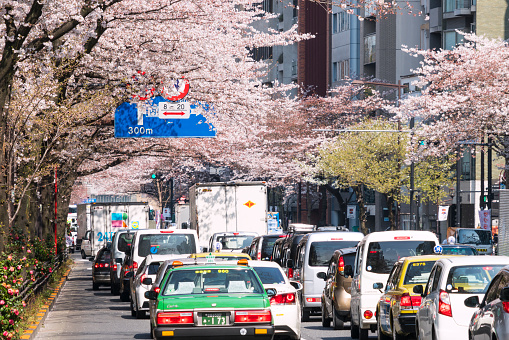 Cherry Blossom「Heavy traffic under the Cherry blossoms trees.」:スマホ壁紙(12)