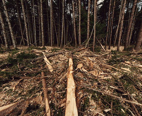 Reforestation「Forest Waste」:スマホ壁紙(7)