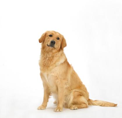 座る「Dog on White 6」:スマホ壁紙(11)