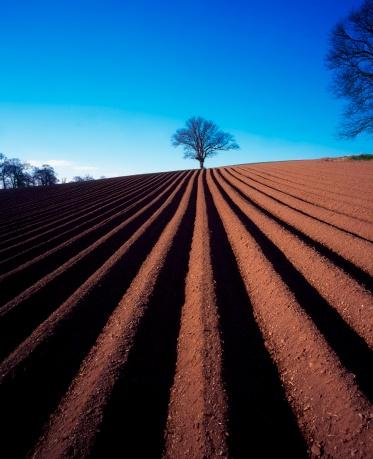 セイヨウカジカエデ「Sycamore tree, ploughed field in winter, Ireland」:スマホ壁紙(12)