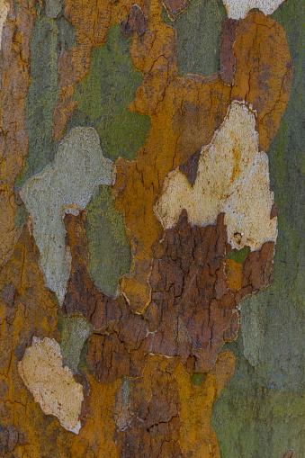 セイヨウカジカエデ「Sycamore tree bark pattern」:スマホ壁紙(11)