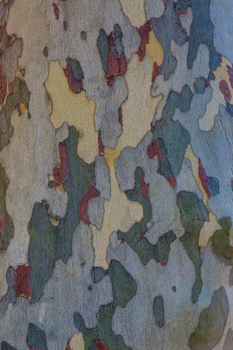 セイヨウカジカエデ「Sycamore tree bark pattern」:スマホ壁紙(10)