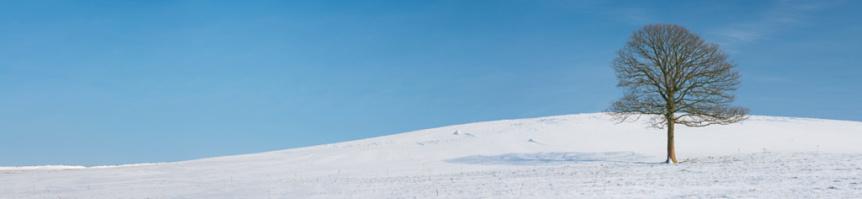 セイヨウカジカエデ「Sycamore Tree, snow」:スマホ壁紙(0)