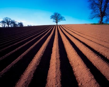 セイヨウカジカエデ「Sycamore Tree and ploughed field in winter, Ireland」:スマホ壁紙(2)
