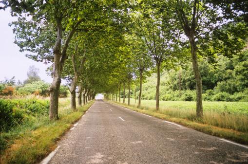セイヨウカジカエデ「Sycamore tree lined road in south of France」:スマホ壁紙(1)