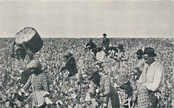 Cotton「Picking Cotton」:写真・画像(17)[壁紙.com]