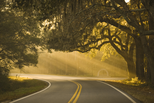 Dividing Line - Road Marking「Misty bend in the road near Savannah, Georgia.」:スマホ壁紙(4)