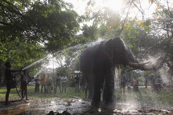 """Sri Lanka「The """"Navam Perehara"""" Festival Is Celebrated In Sri Lanka」:写真・画像(3)[壁紙.com]"""