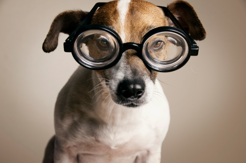 Horn Rimmed Glasses「Serious Dog with Geek Glasses」:スマホ壁紙(5)