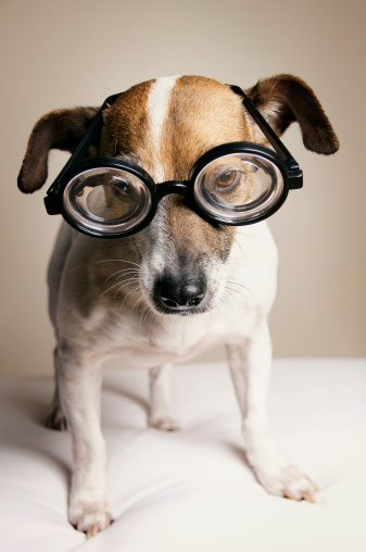 Horn Rimmed Glasses「Serious Dog with Geek Glasses」:スマホ壁紙(10)