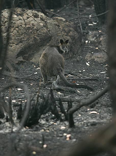 Grampians Bushfire Aftermath:ニュース(壁紙.com)
