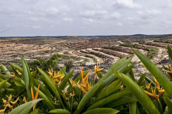 Deforestation「Indonesia's Deforestation Rate Becomes Highest In The World」:写真・画像(7)[壁紙.com]