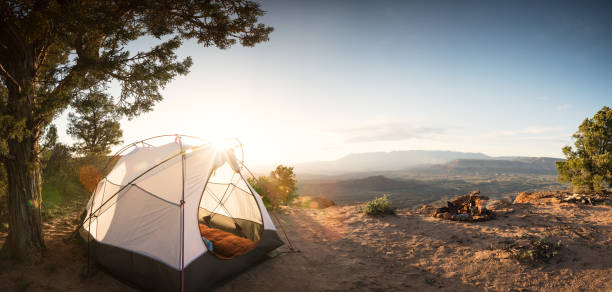 Tent Camping Under a Pinon Tree in the Desert, First Morning Light and a Campfire:スマホ壁紙(壁紙.com)