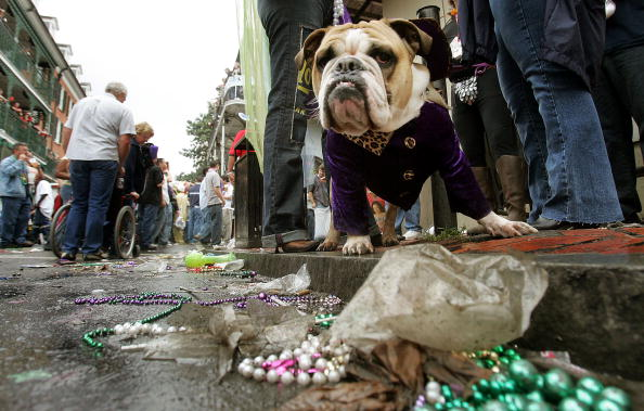 Animal Themes「Mardi Gras Descends Upon New Orleans」:写真・画像(2)[壁紙.com]