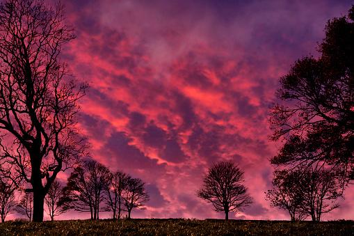 ピンク色「A line of late Autumn trees at sunset」:スマホ壁紙(12)