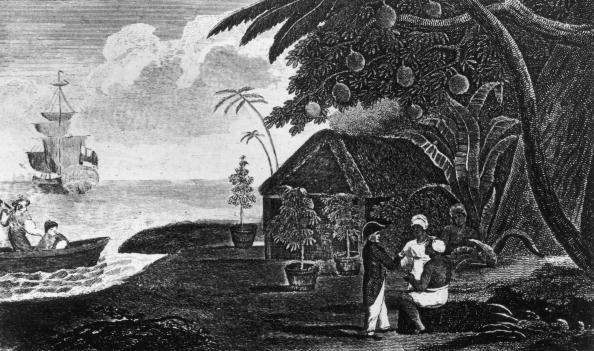 Tropical Tree「The Breadfruit Tree」:写真・画像(8)[壁紙.com]