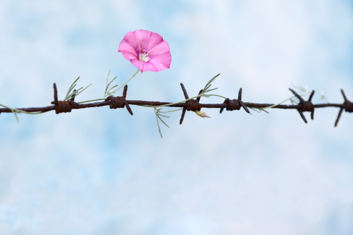 Freedom「Freedom」:スマホ壁紙(11)