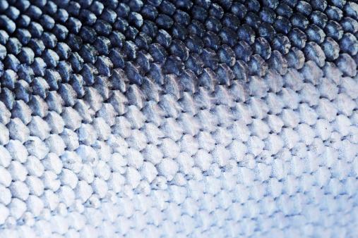 Fish「Fish Scale」:スマホ壁紙(14)