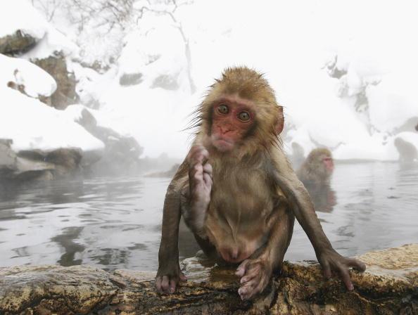 雪の結晶「Japanese Macaques Bathe In Hot Springs」:写真・画像(7)[壁紙.com]