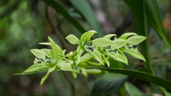 小枝「black orchid」:スマホ壁紙(12)