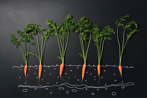 ニンジン「Carrot and blackboard」:スマホ壁紙(9)