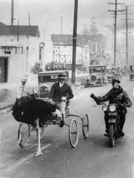 Photography「An ostrich carriage beeing stopped by the police for crossing the speed limit, Photograph, Los Angeles, Around 1930」:写真・画像(2)[壁紙.com]