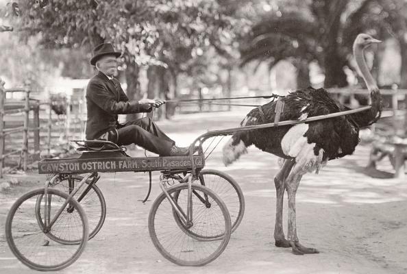 Pasadena - California「Ostrich Pulling Man In Wagon」:写真・画像(4)[壁紙.com]