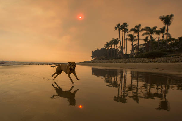 California「Massive Thomas Fire Threatens Santa Barbara County」:写真・画像(11)[壁紙.com]