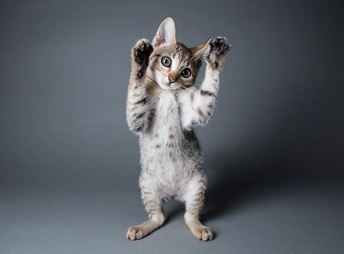 子猫「空気中の足」:スマホ壁紙(7)