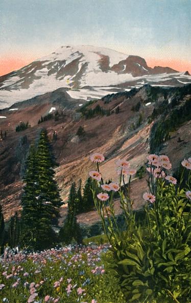 Pacific Northwest「Purple Asters」:写真・画像(5)[壁紙.com]