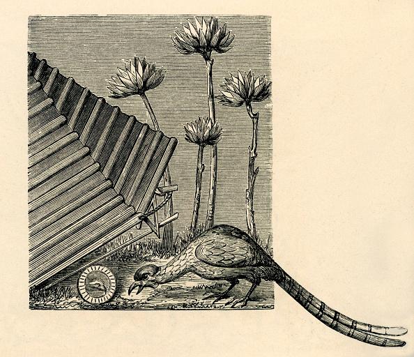 Circa 14th Century「Medieval pheasant hunting」:写真・画像(11)[壁紙.com]
