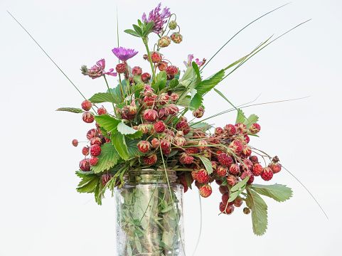 花瓶「wild berry」:スマホ壁紙(13)